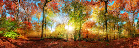 Colorful forest panorama in autumn, with the bright sun centered and casting beautiful rays through the branches