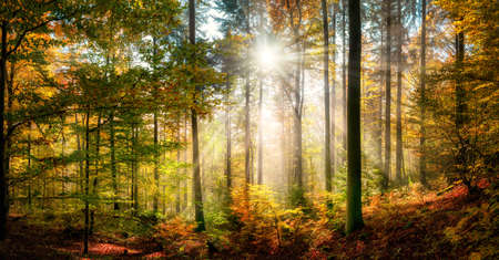 Sunny forest scenery in autumn with sun rays falling through wafts of mist and illuminating the colorful foliage Reklamní fotografie