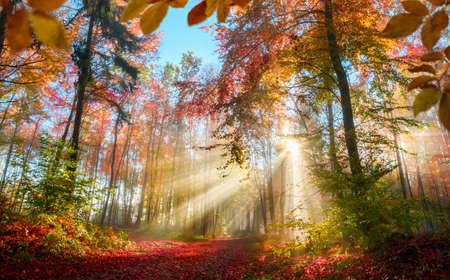 Fabulous sun rays in a colorful forest in autumn illuminating a path covered in red foliage, with some leaves framing the scene