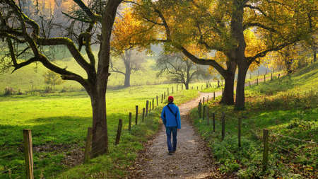 Man enjoying a relaxing walk through the beautiful countryside, with green meadows and autumn trees surrounding the pathway