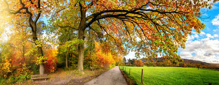 Beautiful rural landscape in autumn, a panoramic scenery with a pathway leading under colorful branches along a green meadow Reklamní fotografie
