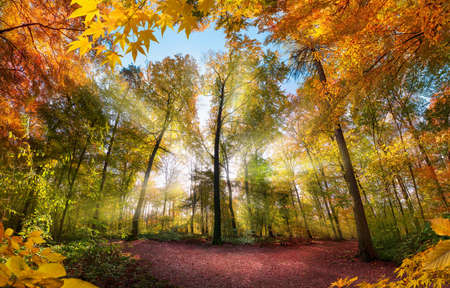 Fabulous forest scenery in autumn with sun rays illuminating the colorful foliage, with branches framing the landscape