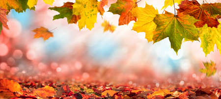 Colorful maple leaves of autumn decorate a beautiful nature bokeh background with foliage on the forest ground, with red, orange, yellow, green and blue