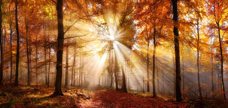 Enchanting sun rays in a golden forest in autumn illuminating a path covered in red foliage. The beauty of nature in vibrant warm colors
