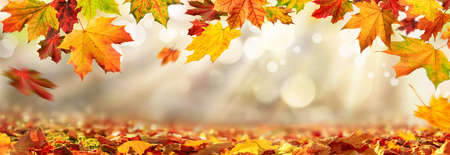 Colorful autumn leaves decorate a beautiful nature bokeh background with foliage on the forest ground, wide panorama format Reklamní fotografie