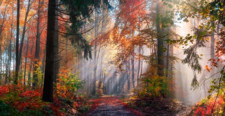 Magical autumn scenery in a dreamy forest, with rays of sunlight beautifully illuminating the wafts of mist and painting stunning colors into the trees