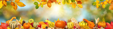 Colorful wide autumn bokeh background with rays of the sun and a frame of decorative pumpkins, foliage and other ornate natural objects Reklamní fotografie