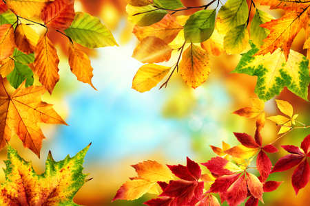 Nature frame with colorful autumn leaves in red, yellow and green around a nice abstract bokeh background with bright blue sky Stock fotó - 155450344