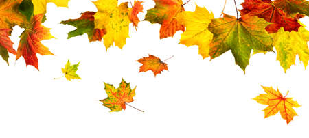 Colorful autumn leaves hanging and falling down, isolated in studio on white
