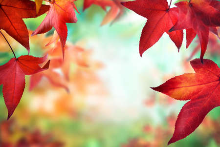 Red maple leaves framing a colorful nature bokeh background with the spirit of autumn