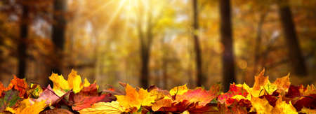 Closeup of autumn leaves on the ground in a forest, defocused trees with golden foliage and beautiful rays of sunlight in the background Reklamní fotografie