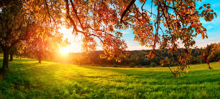 The sun setting behind the hanging branches of a beautiful tree in glorious autumn colors, with red leaves, green meadow and blue sky