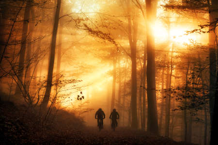 Surreal light mood in a forest, with the sun beams falling through the autumn fog and silhouettes of two people biking on a path