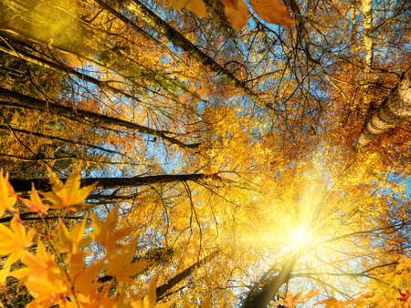 The bright autumn sun gloriously shining through the branches of deciduous trees with yellow and orange foliage in a forest Reklamní fotografie