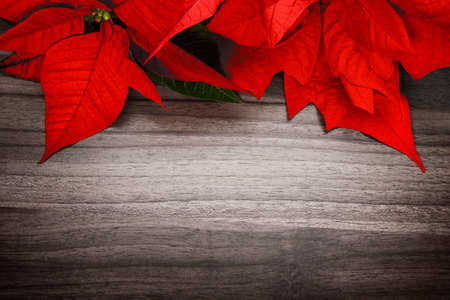 Christmas or seasonal background composed of a wood surface and poinsettia, with elegant vignetting