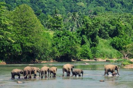 Elephants family photo
