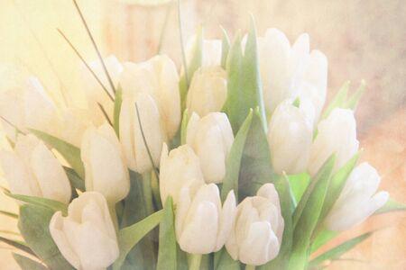 sensible: Vintage tulip background