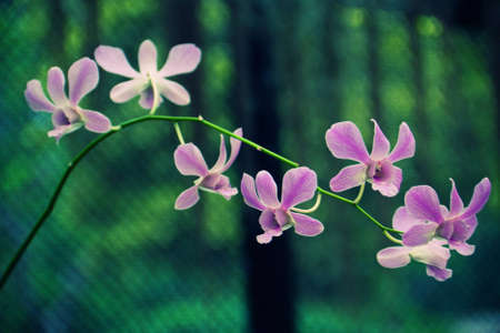 Beatiful orchid flowers on a twig in real nature