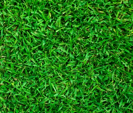 Natural background - green grass texture Stock Photo - 15886695