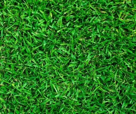Natural background - green grass texture