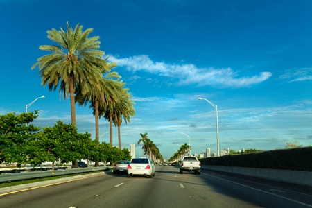 three palm trees: Road from South Beach to Miami