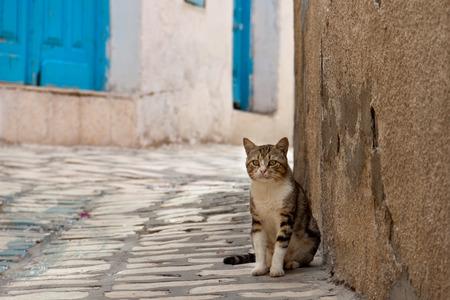 Beautiful cat on Tunisian street