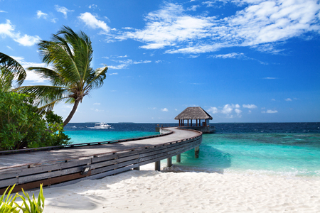 Tropical Maldives island with coconut palm tree, wooden bridge and water villa. Exotic landscape Reklamní fotografie