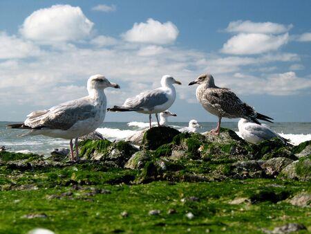 nautic: Seagull chat Stock Photo
