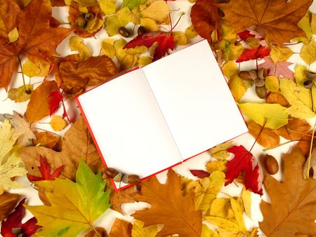 Open book surround by leafs and nuts photo