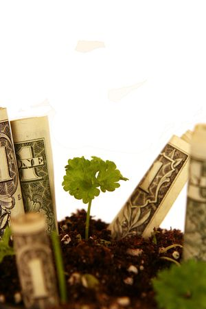 strategical: Concept of money growing (with copy space) Stock Photo