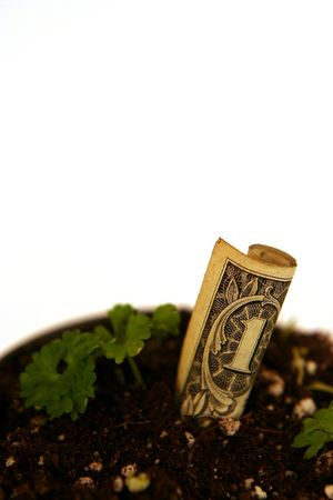 strategical: Concept of green money growing (with copy space) Stock Photo