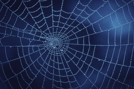 Photo of Cobweb with Water Droplets in Nature. Natural Darkblue Background with Pure Transparent Dew Drops on Spiderweb. Autumn Morning Texture of Nature in Fog Weather. Banco de Imagens