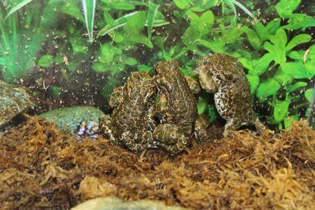 inhabits: A beautiful olive toad that inhabits the wild