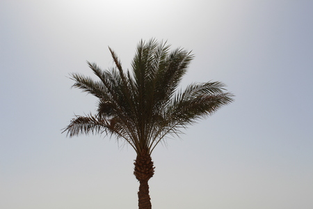 Palms and bungalow in hotel in Hurghada, Egypt Stock Photo