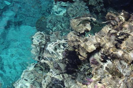 Coral in the red sea. Sinai peninsula