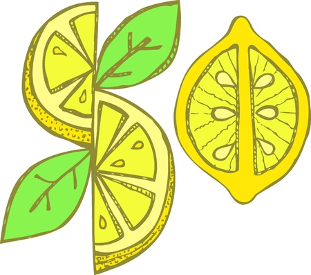 Hand drawn lemon. illustration Vector