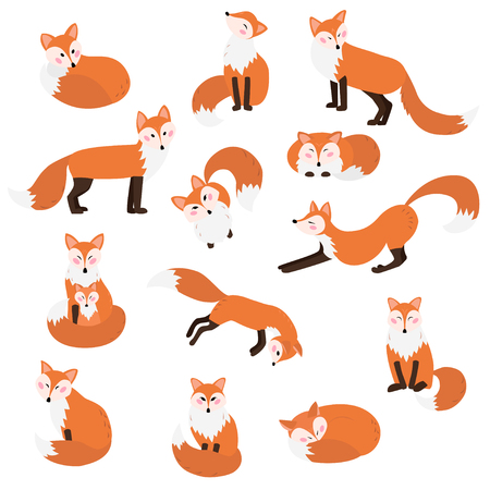 13 cute foxes collection