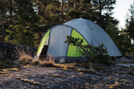Tent in the pine forest Standard-Bild