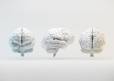 The human brain from different angles. 3d illustration. Stock Photo