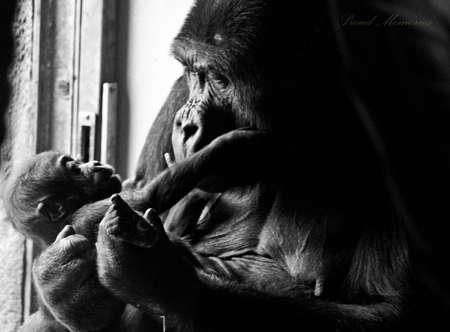 the offspring: Gorila y los hijos