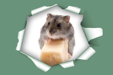 avid: mouse and cheese in heat hole