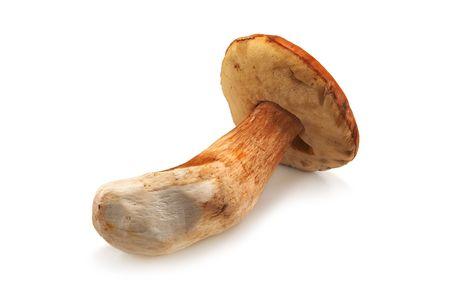 fungous: autumn mushroom isolated on white