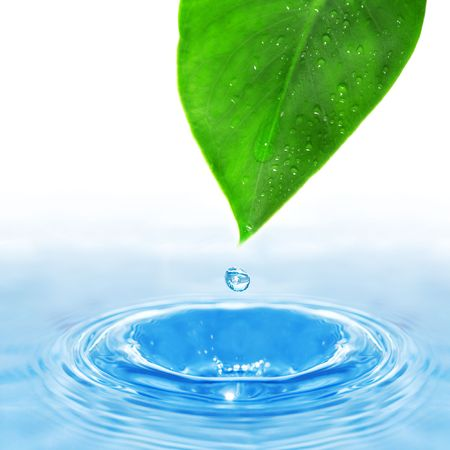 water drop and green leaf Stock Photo - 3736514