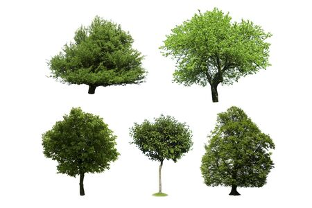 different tree isolated on white