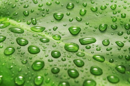 green sheet background with raindrops Stock Photo - 3741674