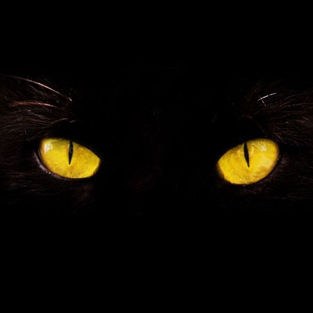 cat eye: wild yellow eyes isolated on black