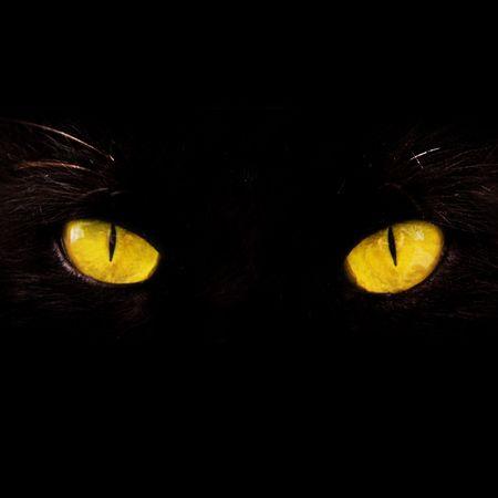 b�se augen: wilde gelbe Augen isoliert auf schwarz Lizenzfreie Bilder