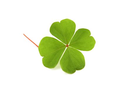 green clover isolated on white Stock Photo - 3748173