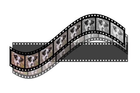 strip a dog: film whith dogs photo isolated