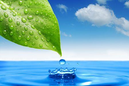 kropla deszczu: zielony liść i kroplę wody